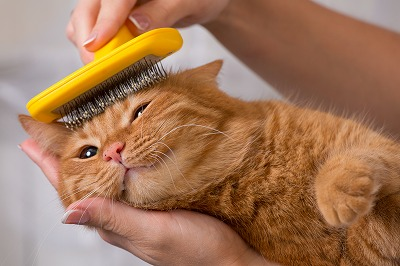 cat brushings