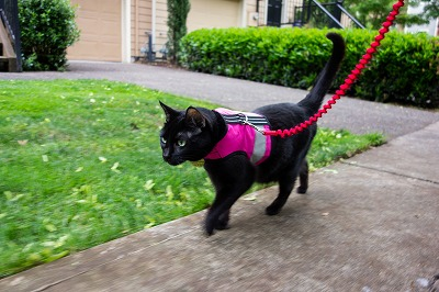 harness_cat