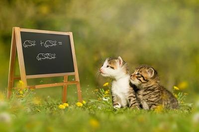 猫トレーニングTOP写真