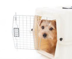 犬との同行避難を想定しての準備【物品編】イメージ写真