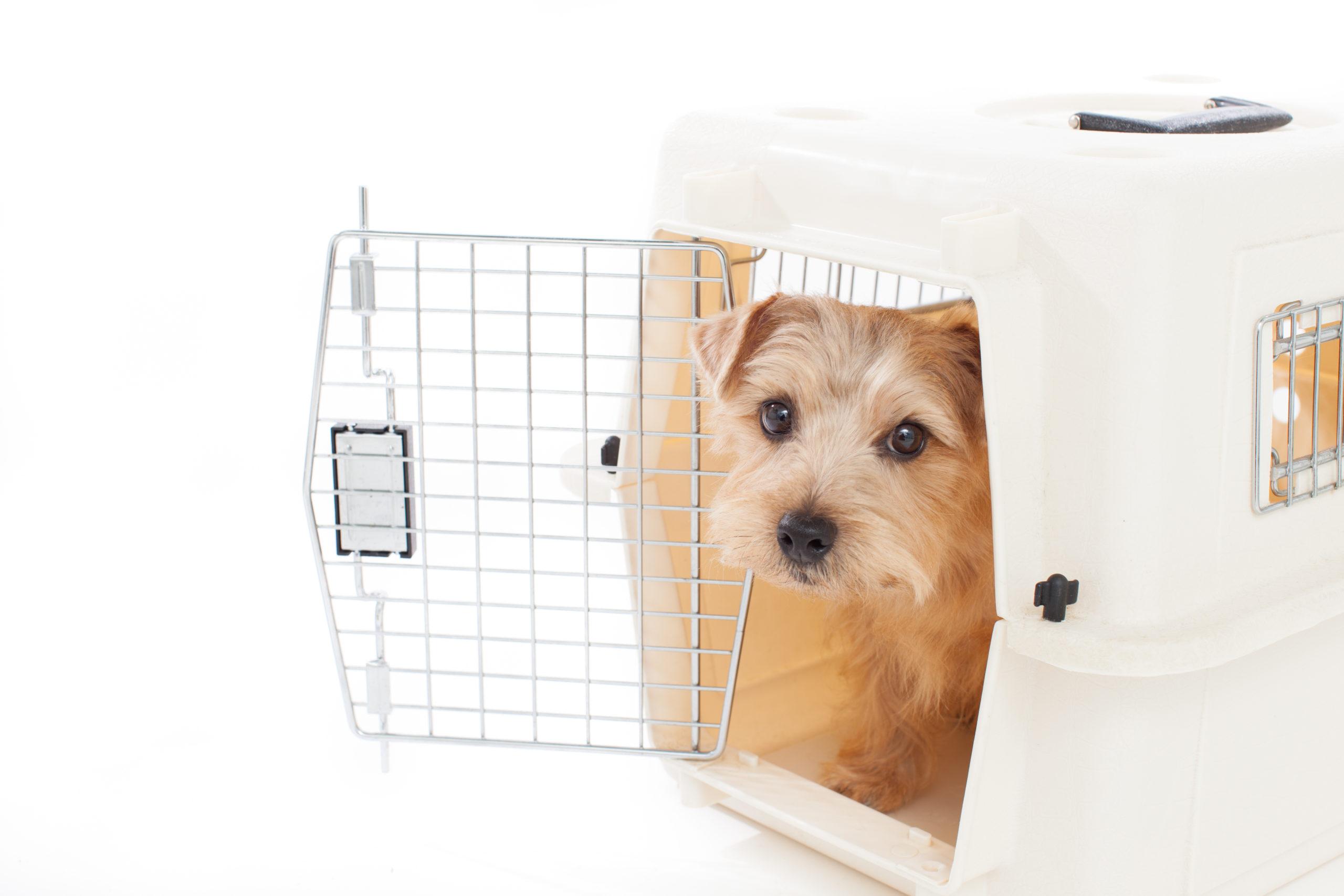 犬との同行避難を想定しての準備【物品編】TOP写真