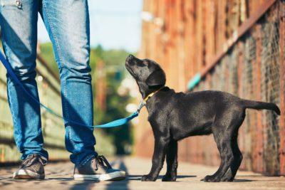 犬同行避難トレーニングTOP写真