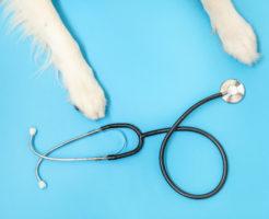 犬の健康管理TOP写真